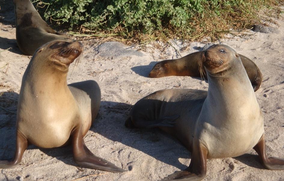 Galápagos 1